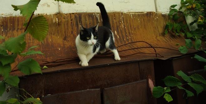 Кот спас ребёнка от падения с лестницы (видео)