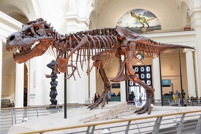 В США посчитали, сколько тираннозавров в древности населяли Землю