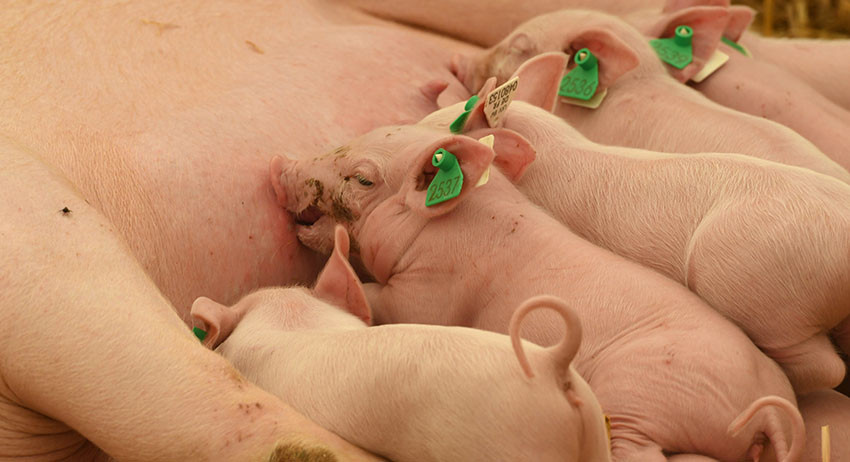 Мусульман кормили свининой на конференции в Берлине (фото)